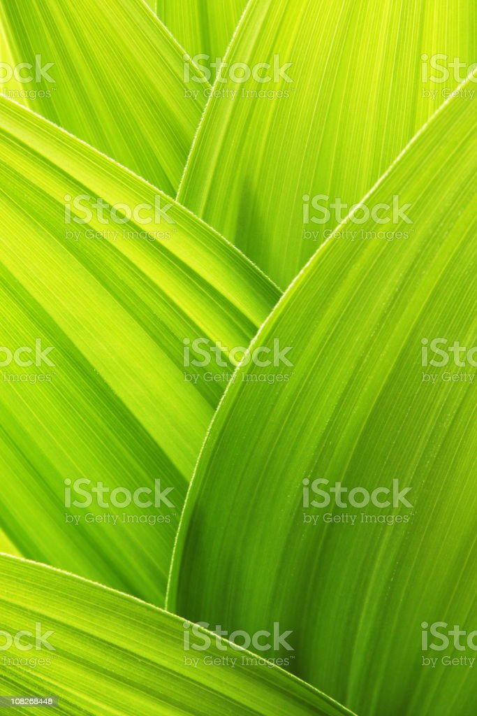 Lime green plant leaf textured wallpaper background - Royalty-free Backgrounds Stock Photo