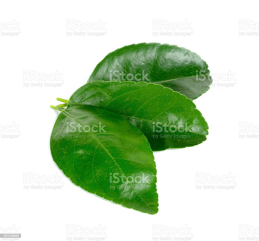 lime leaf Isolated on the white background stock photo