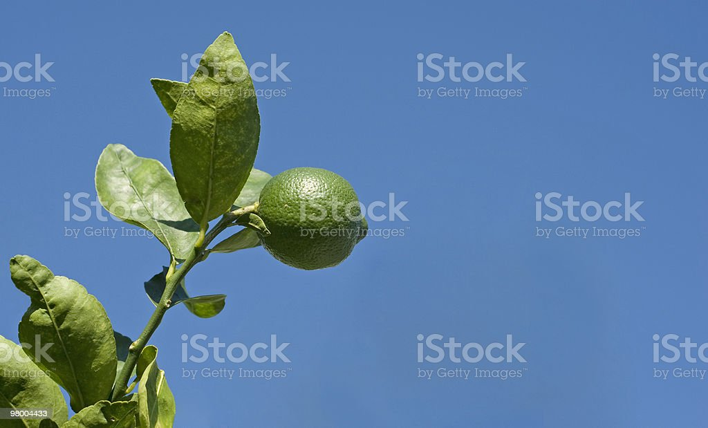 Lime Tree with Blue Sky Background royalty-free stock photo