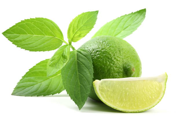 Lime with Mint stock photo