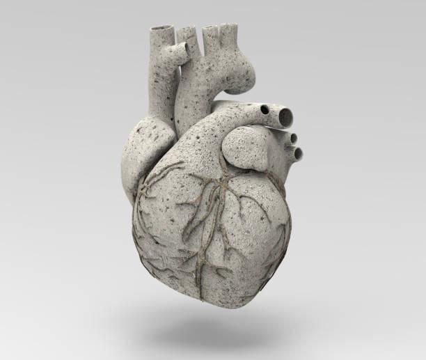 3d kalksteen menselijk hart illustratie - calcium stockfoto's en -beelden
