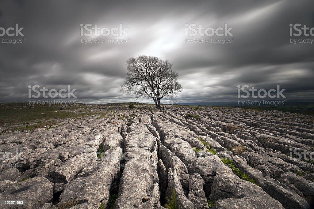 limestone pavements stock photo