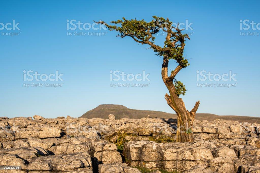 Pavimentos de pedra calcária - Foto de stock de Calcário royalty-free