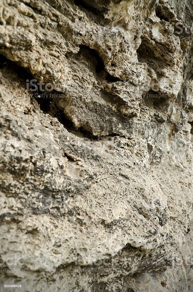 "Limestone€"" sedimentary rock of organic origin stock photo"
