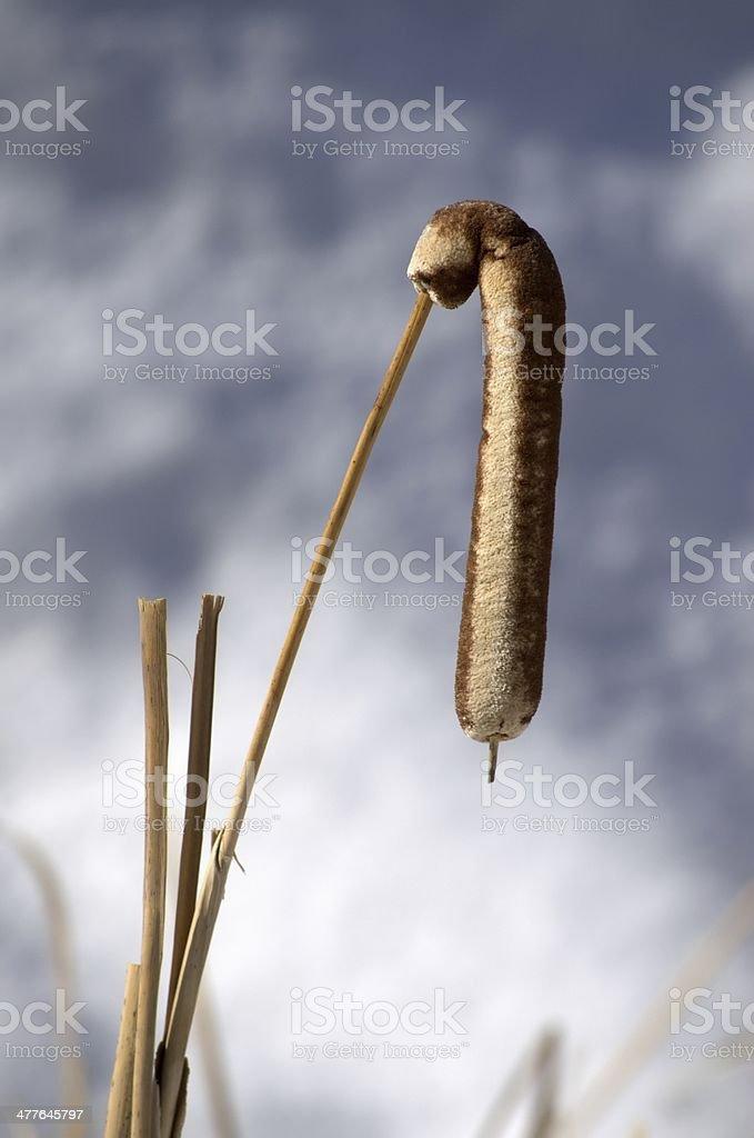 Limp stock photo