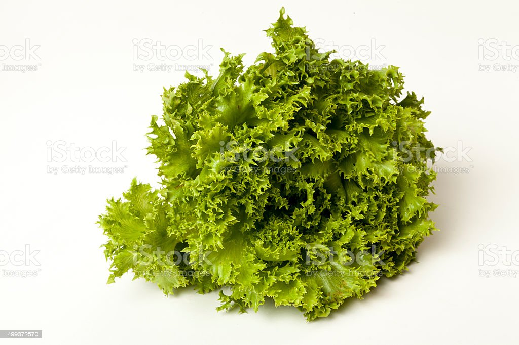 Linda Alface crespa verde fresca stock photo
