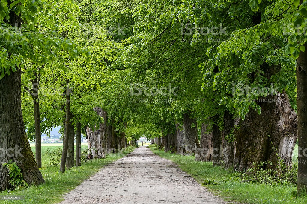Linden Avenue stock photo