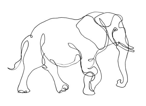 zeichnung von elephant - elefanten umriss stock-fotos und bilder