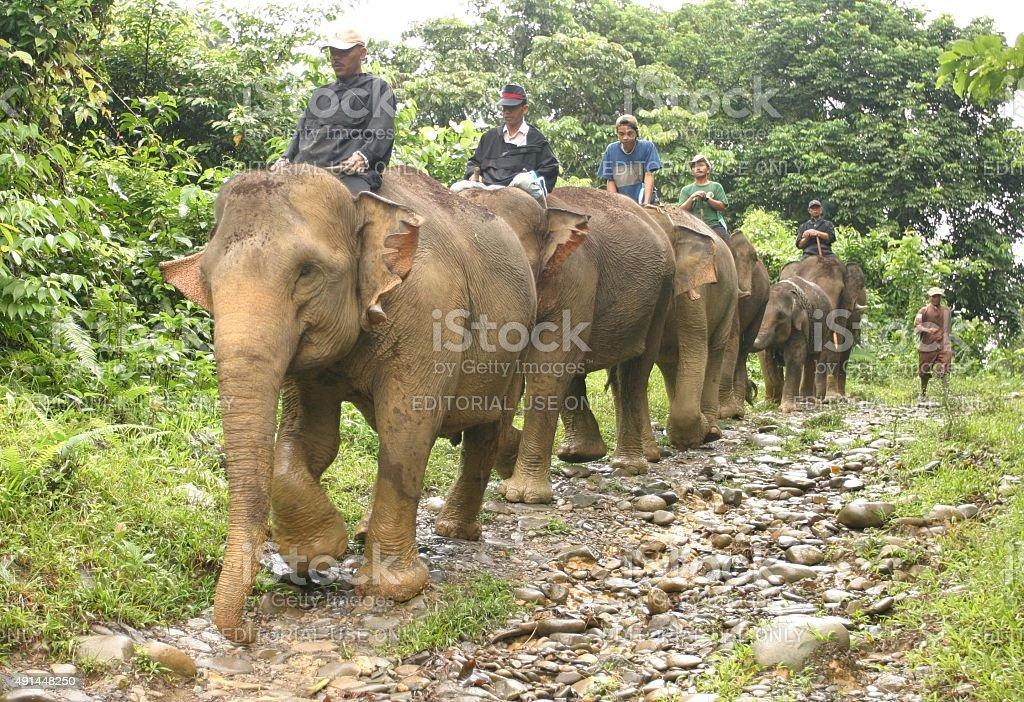 Reihe von asiatischen Elefanten zu Fuß miteinander verlinkt Badehose – Foto