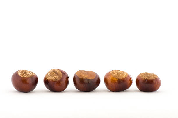 Line of Conkers stock photo