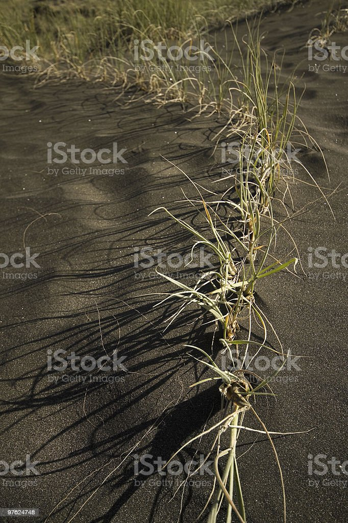 Line of dune grass royalty-free stock photo