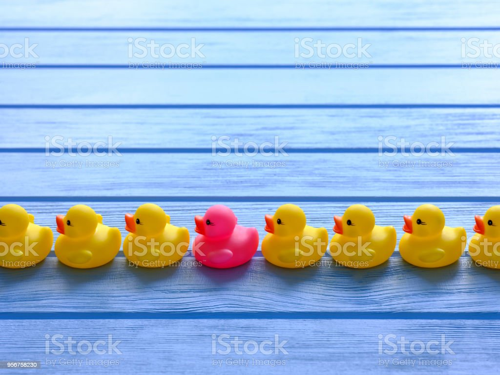 Line of generic yellow rubber ducks, moving in an orderly line, with one pink duck standing out among the line of yellow ducks, set on a blue wooden grained table. stock photo