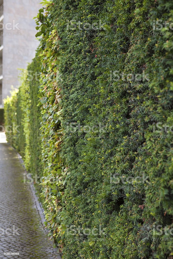 Line of green on  cobblestone road royalty-free stock photo