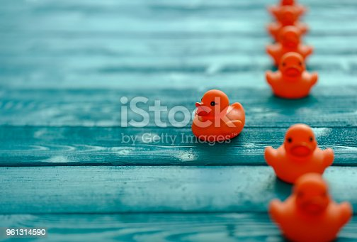 istock Line of orange rubber ducks, moving in an orderly line, with one duck moving out of the line following it's own direction, set on a blue wooden grained background, conceptually representing water. 961314590