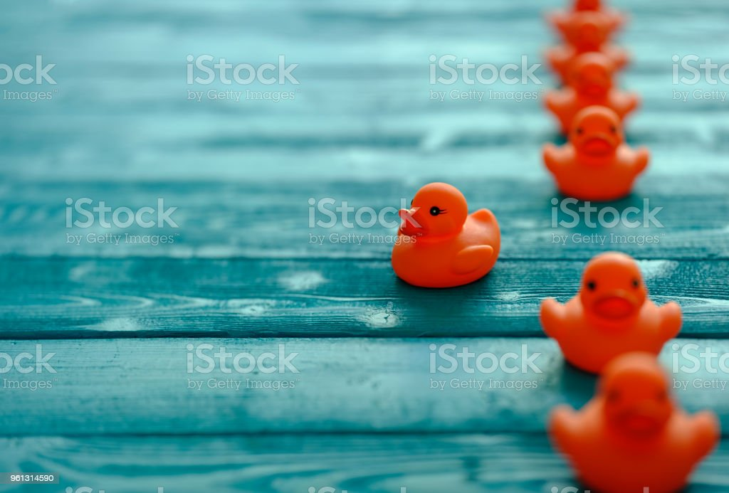 Line of orange rubber ducks, moving in an orderly line, with one duck moving out of the line following it's own direction, set on a blue wooden grained background, conceptually representing water. stock photo