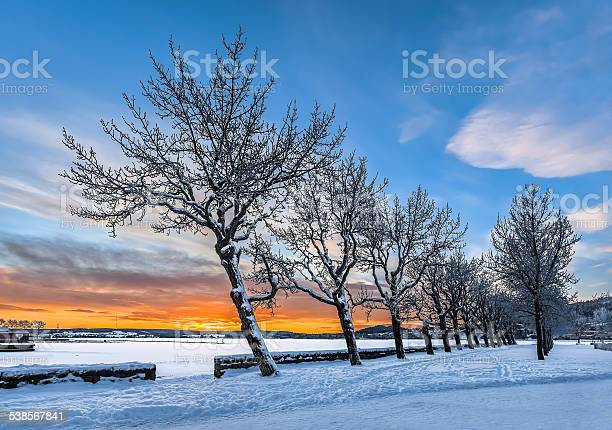 Photo of Line of trees at winter sunset, Sweden