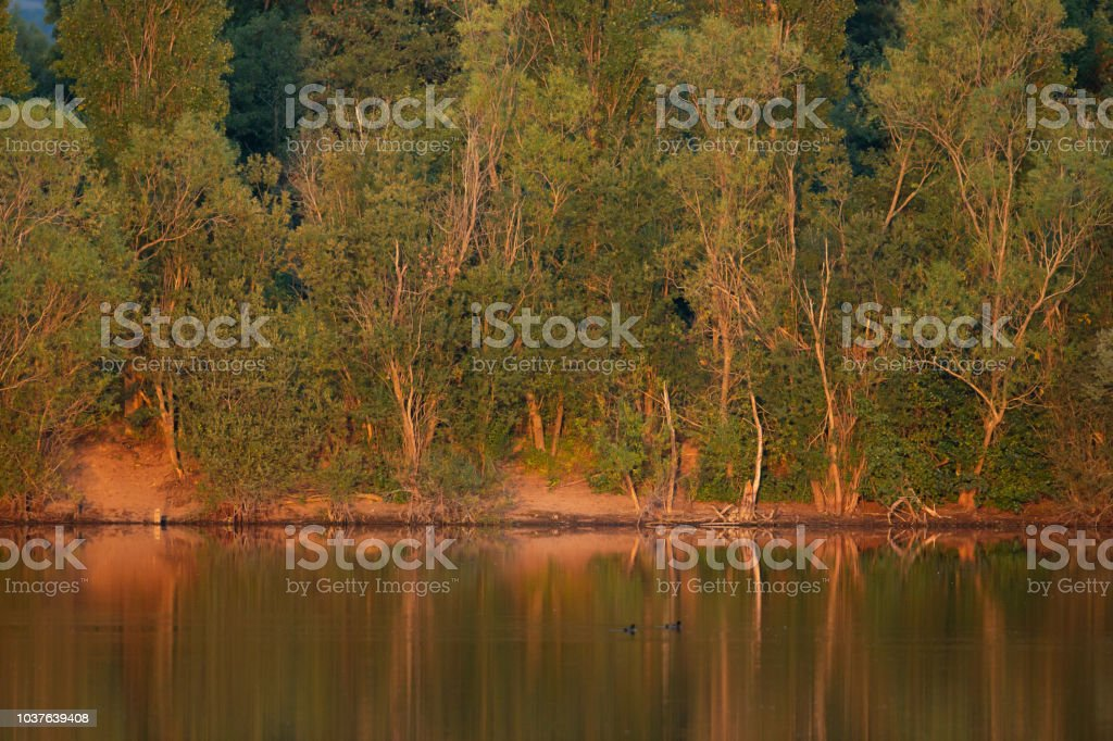 Line of trees illuminated by the evening sun. stock photo