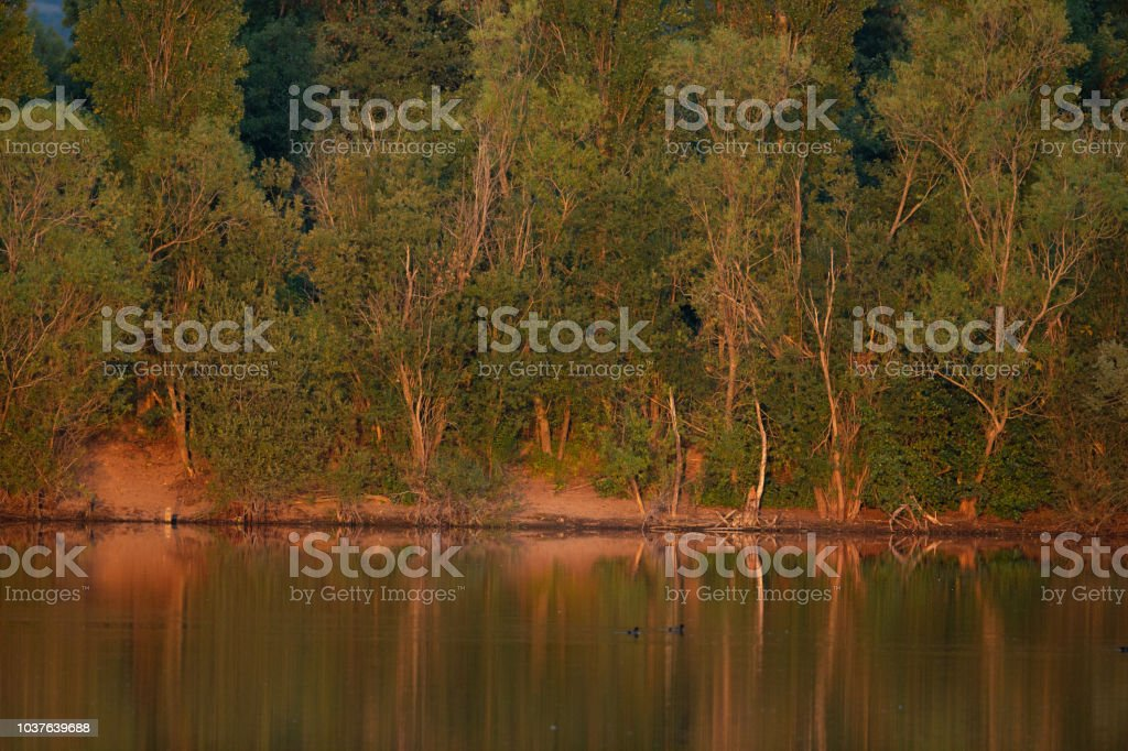 Line of trees illuminated by the evening sun reflected in the water. stock photo