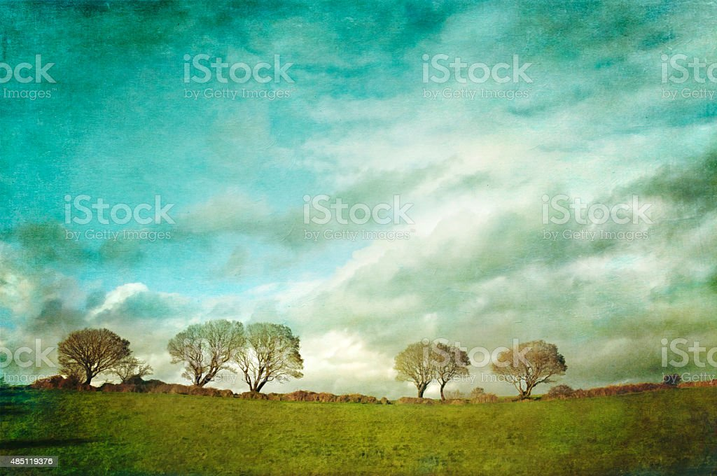 Line of trees in a field stock photo