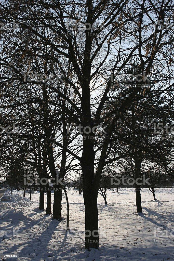 Ligne d'arbres en hiver photo libre de droits