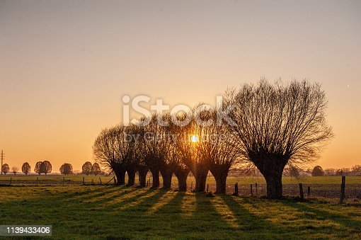 istock A line of trees near Sunset 1139433406
