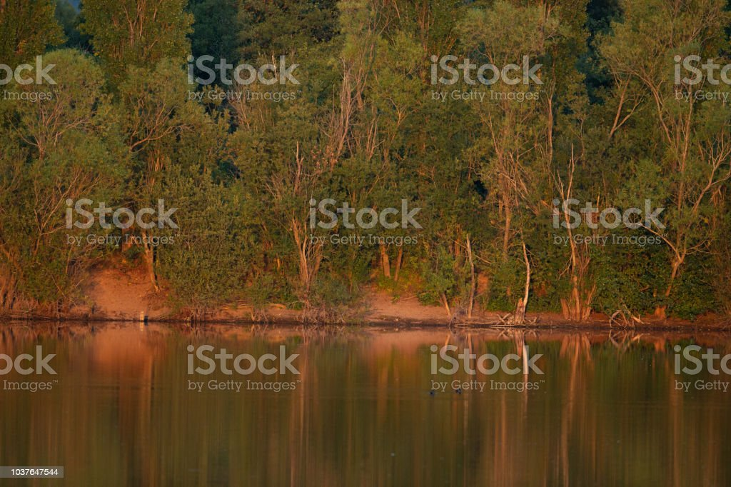 Line of trees on a bank illuminated by the evening sun. stock photo