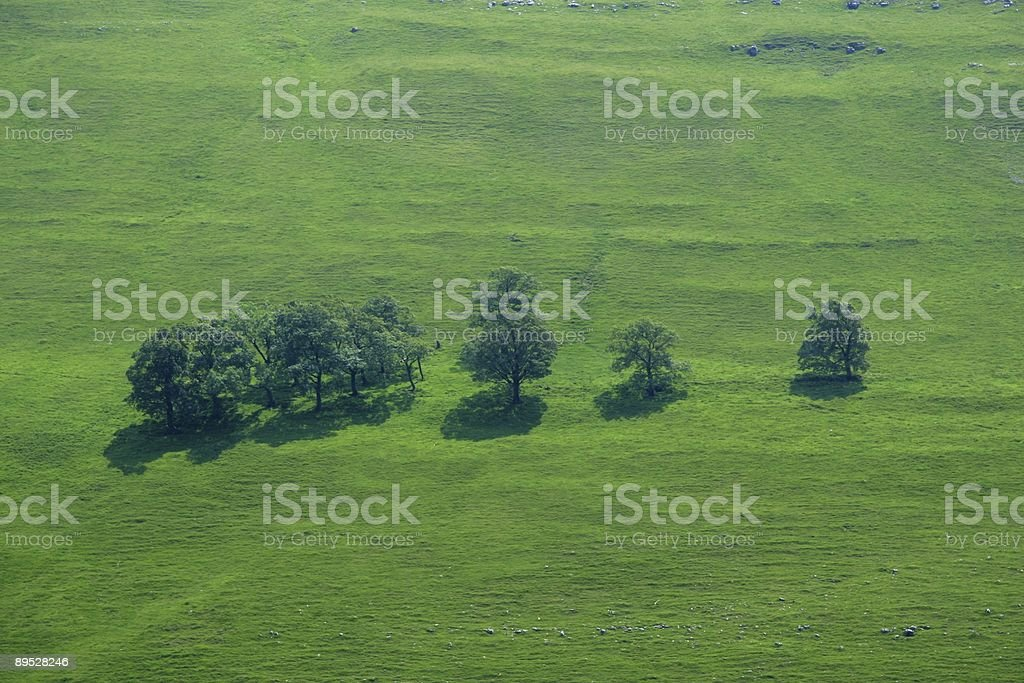Line of trees on a Yorkshire hillside royalty-free stock photo