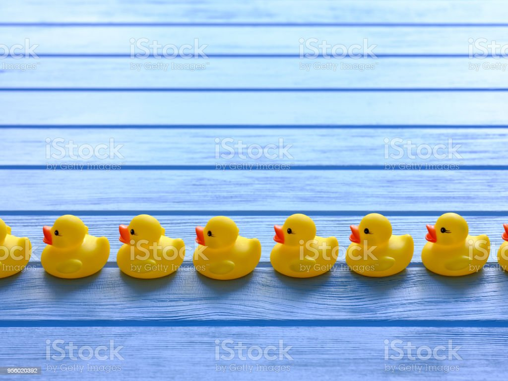 Line of yellow rubber ducks, moving in an orderly line, set on a blue wooden grained table. stock photo