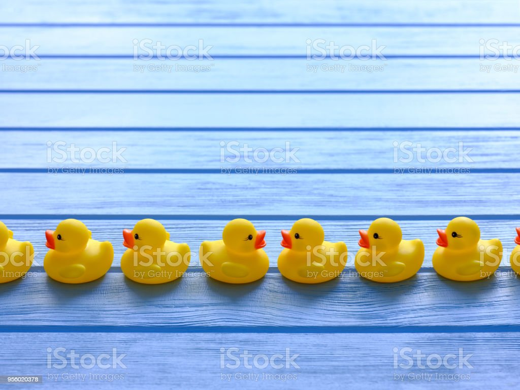 Line of yellow rubber ducks, moving in an orderly line, with one duck facing the other way, set on a blue wooden grained table. stock photo