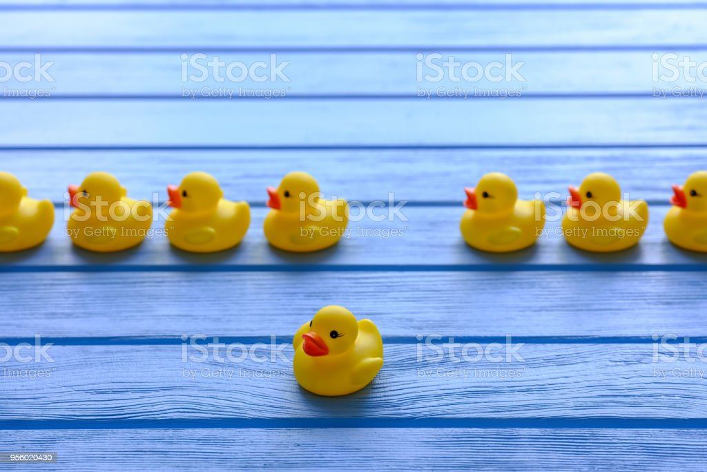 Line of yellow rubber ducks, moving in an orderly line, with one duck breaking away going off in a different direction, set on a blue wooden grained table. stock photo