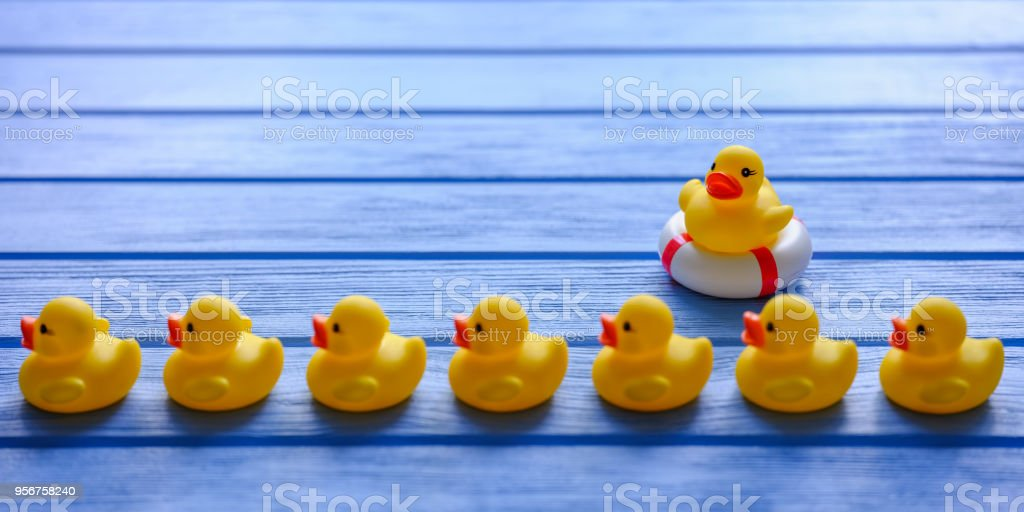 Line of yellow rubber ducks, moving in an orderly line, with one duck watching the ducks in a row sitting on an inflateable life ring nearby, set on a blue wooden grained table. stock photo