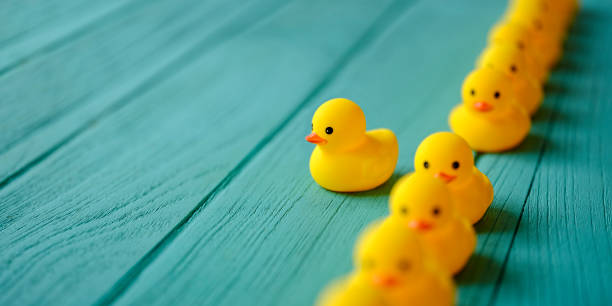 line of yellow rubber ducks, moving in an orderly line, with one yellow duck breaking ranks moving out of the line following it's own direction, set on a turquoise colored wooden grained background, conceptually representing water. - defiance stock pictures, royalty-free photos & images
