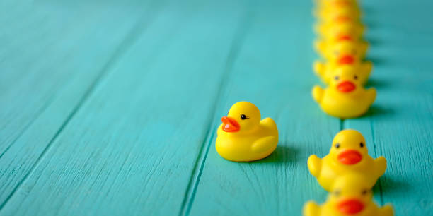Line of yellow rubber ducks, moving in an orderly line, with one yellow duck breaking ranks moving out of the line following it's own direction, set on a turquoise colored wooden grained background, conceptually representing water. Line of yellow rubber ducks, moving in an orderly line, with one yellow duck breaking ranks moving out of the line following it's own direction, set on a turquoise colored wooden grained background, conceptually representing water. Concept image representing; standing out from the crowd, against the grain, freedom, individuality, against the grain, change, innovation etc. duck bird stock pictures, royalty-free photos & images