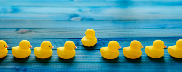 Line of yellow rubber ducks, with one duck breaking away from the line moving in it's own direction, scene set on an old turquoise, blue and green colored weathered, wood grain, wooden panel background, conceptually representing water. stock photo
