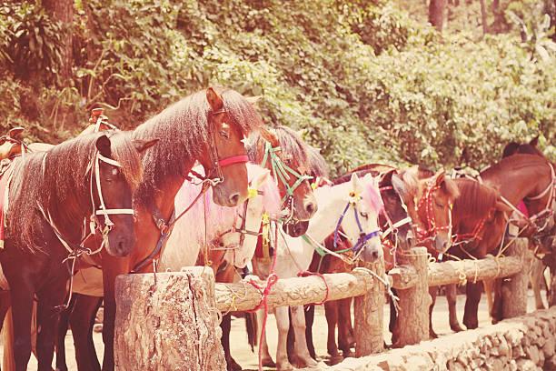 lined up horses stock photo