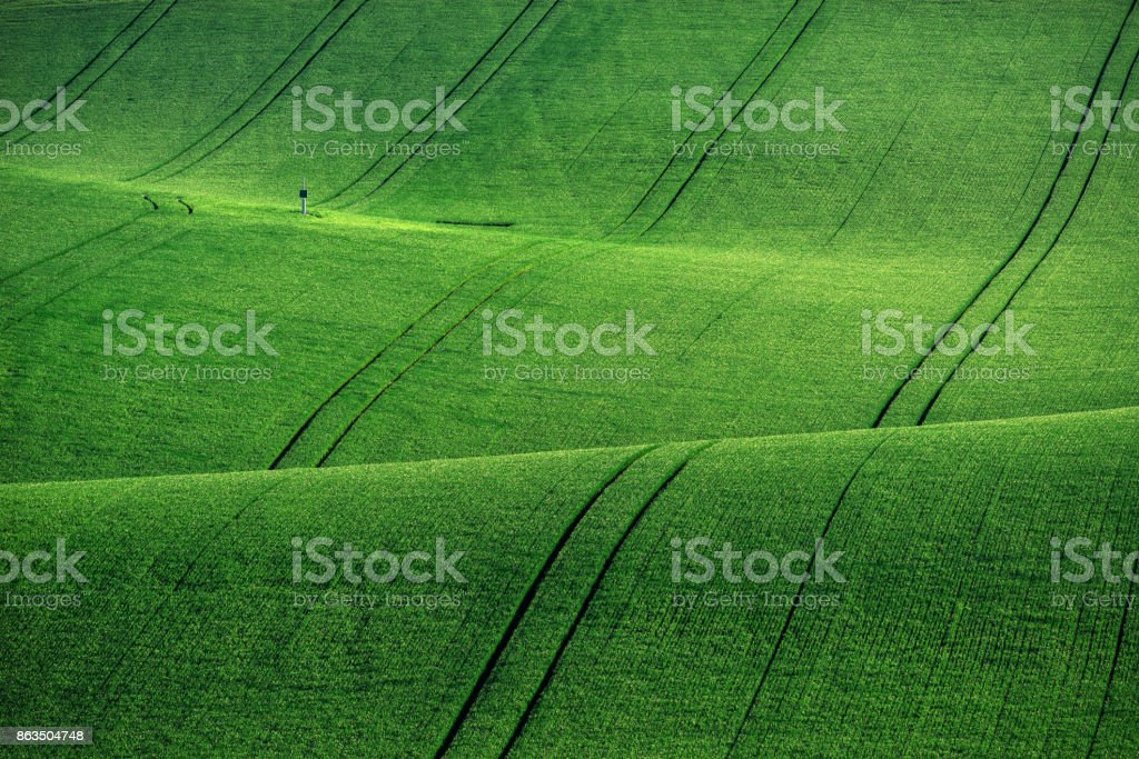 Lines and waves with trees in the spring, South Moravia, Czech Republic stock photo