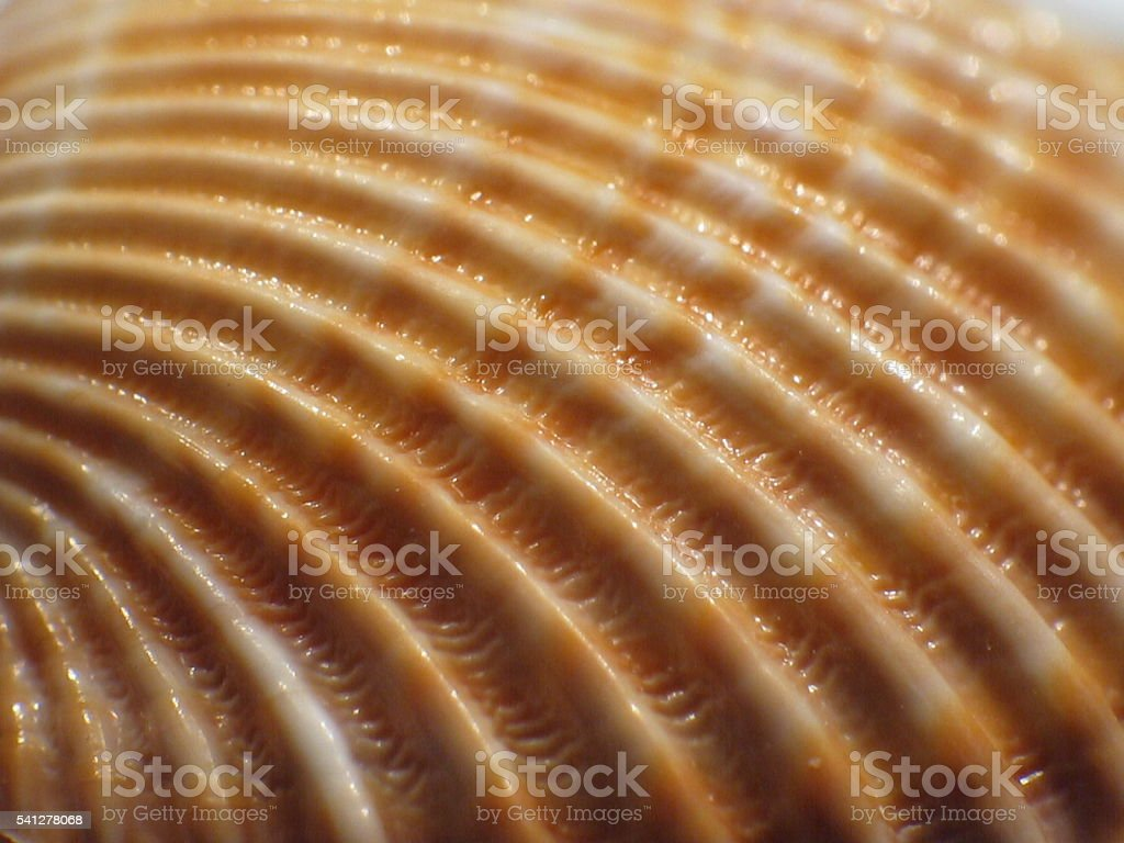 Lines of a shell stock photo