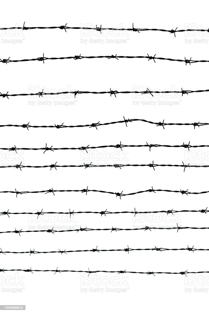Lines of barbed wire against white background, copy space stock photo