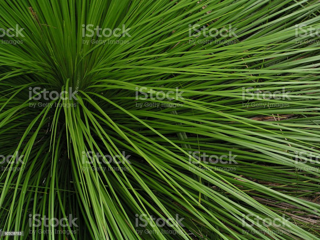 Lines of Green royalty-free stock photo