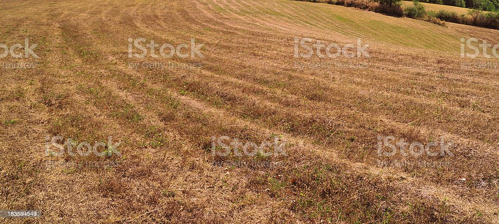 Lines of mowing royalty-free stock photo