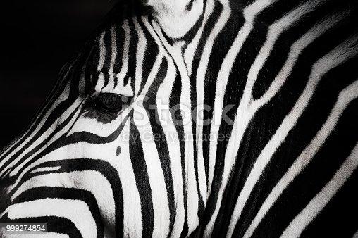 a zebra and wonderful patterns