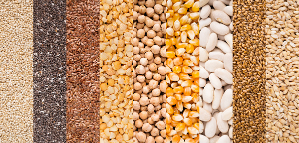 istock Lines with different types of grains on white 1069993646