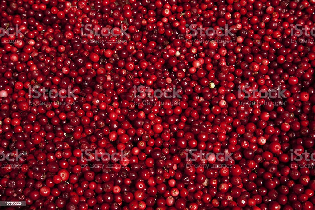 Lingon berries at farmers market. Stockholm Sweden. stock photo