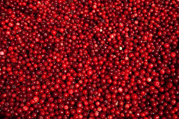 lingon berries at farmers market. stockholm sweden. - cranberry stock photos and pictures