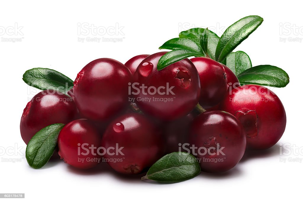 Lingonberries with leaves, paths stock photo