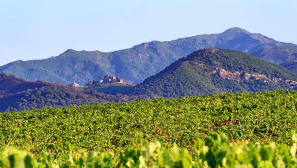 Vignoble de Linguizzetta - Photo
