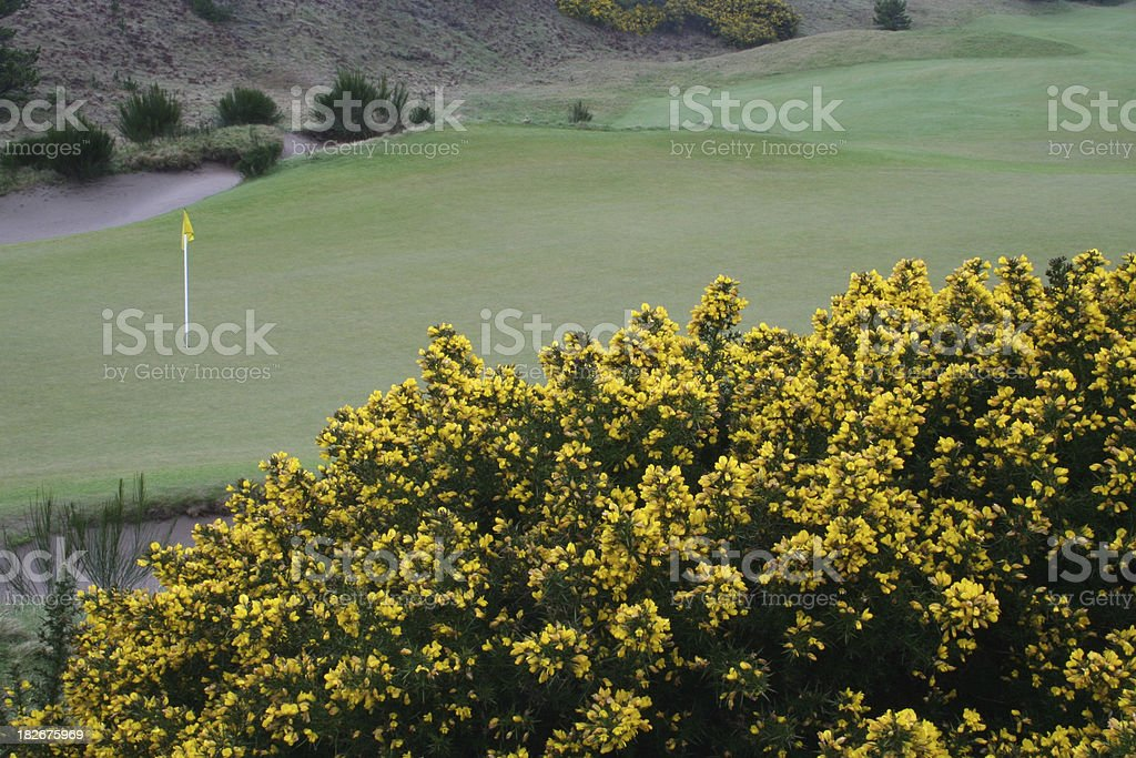 Links Golf Green stock photo