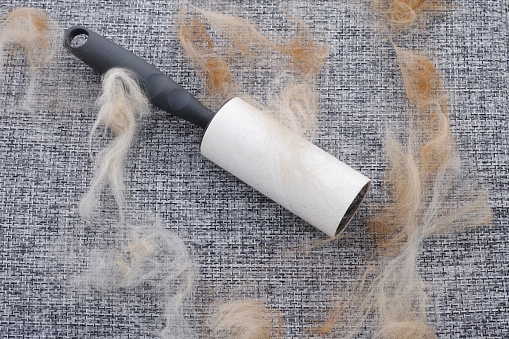 A lint roller with animal fur and fluff on it. Close up.