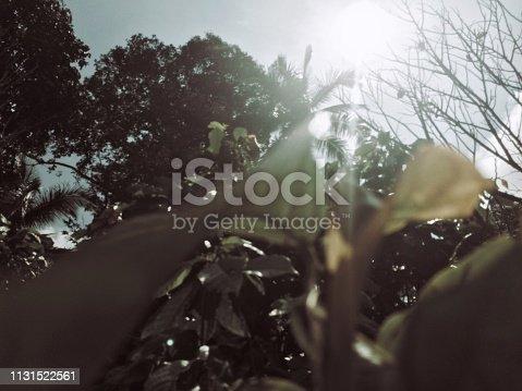 1132038369 istock photo Lintau, 2019 1131522561