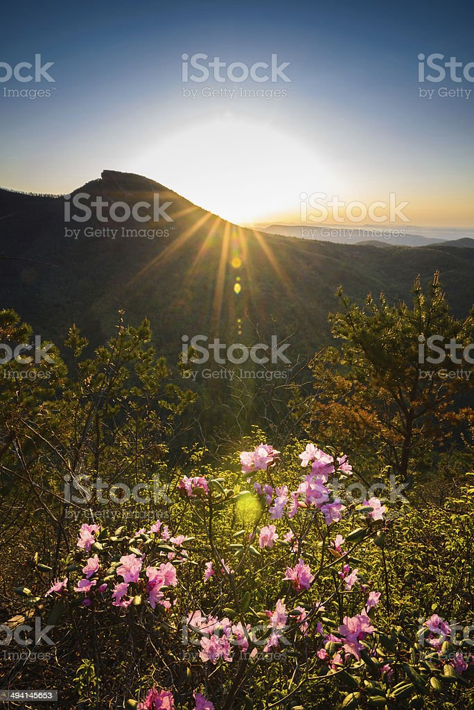 Linville Blooming stock photo